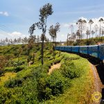 5 Must Do Things in Nuwara Eliya, Sri Lanka – Beyond Tea Plantations